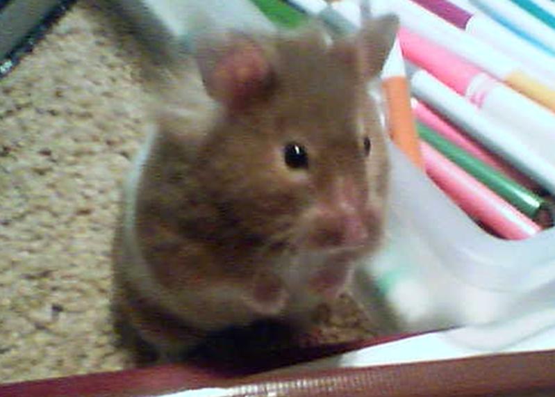 Hamster(rev 1)