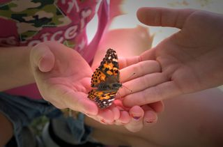 Butterfly Spotlight